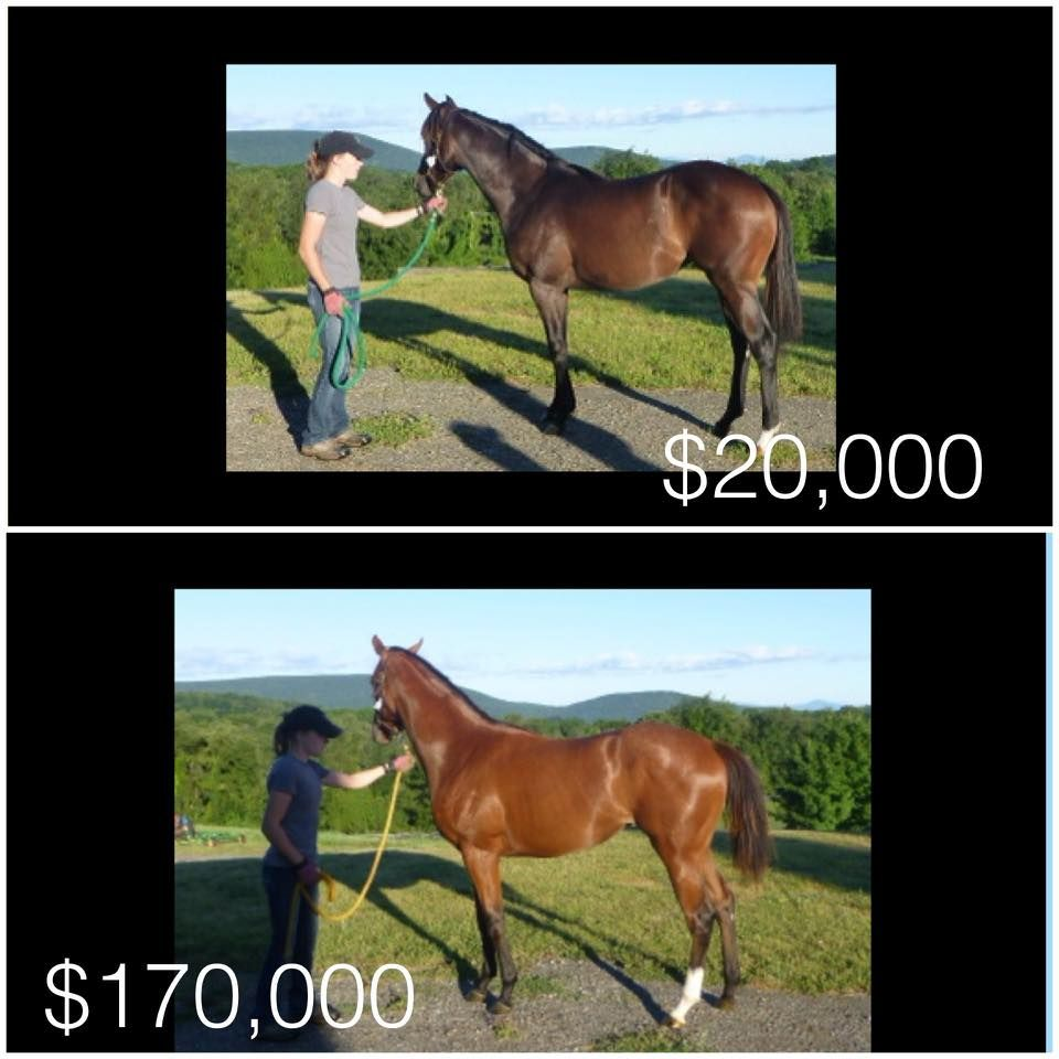 The yearlings I sales prepped and their selling price